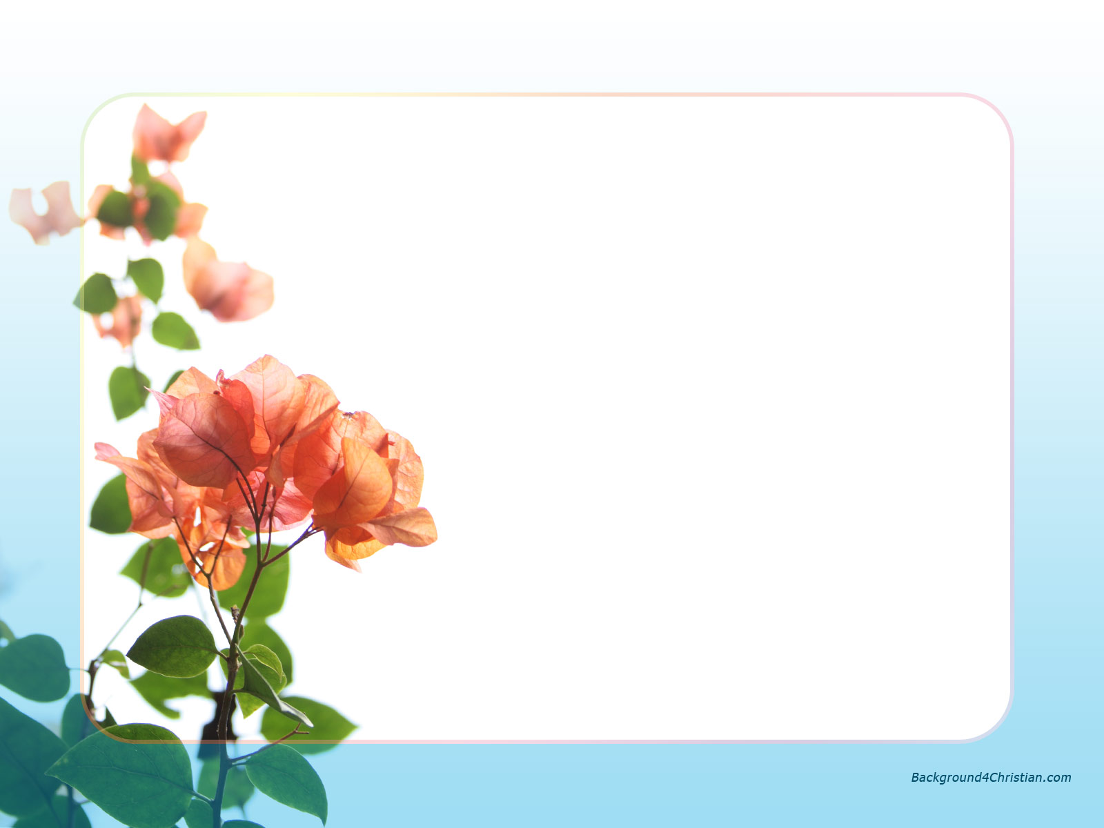 beautiful red flower with blue border frame background for powerpoint