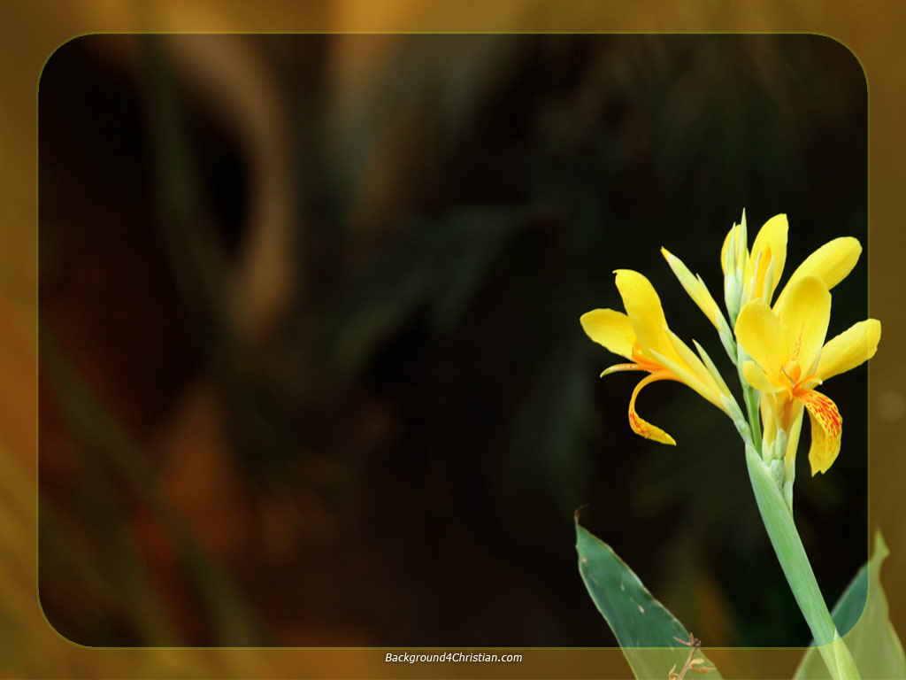 Powerpoint background background 4 christian worship slide template you can download this yellow flower frame ppt background in 1024768 alramifo Gallery